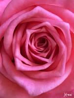 Blossoming by HariCoelho
