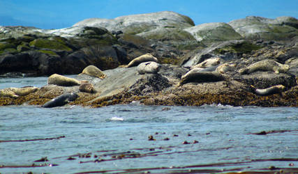 Seal Party