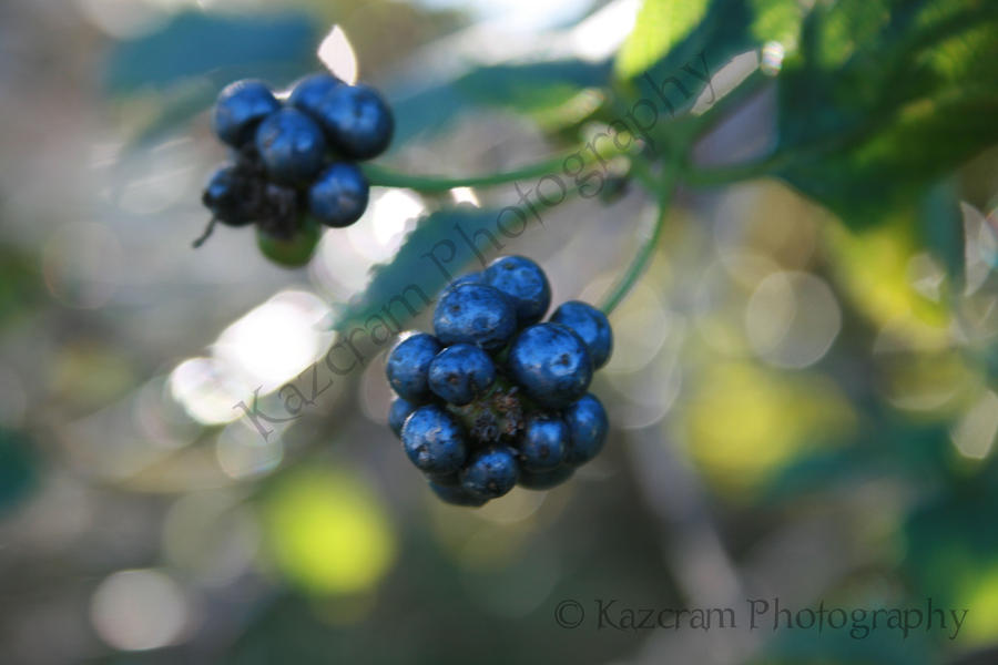 Blues and Berries by coldbritto