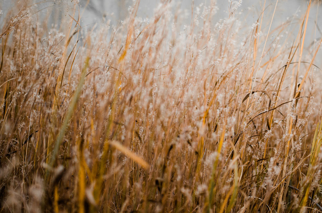 Tall Grass Texture | www.imgkid.com - The Image Kid Has It!