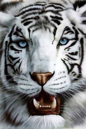 Tiger by dasunderground