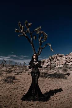 Desert's shadows