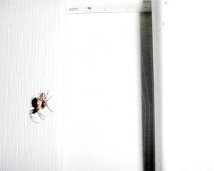 Arachnid by fugm