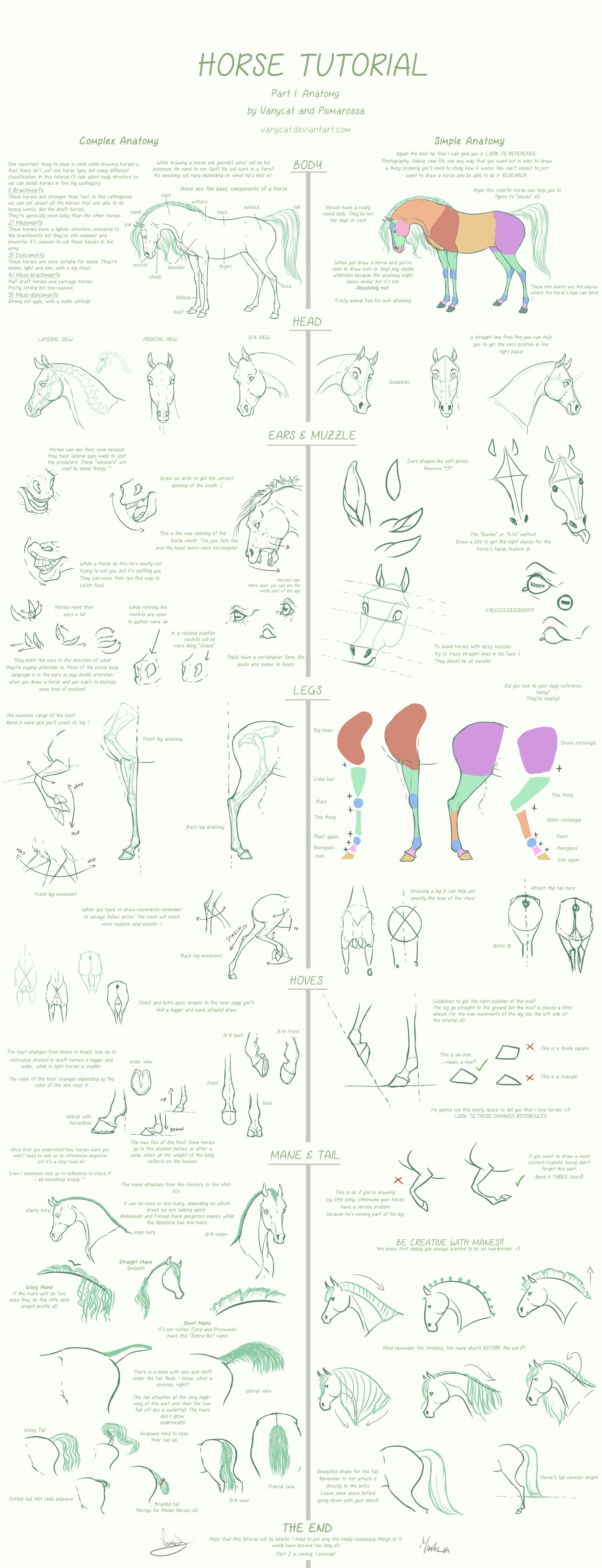 Horse Tutorial Part 1 (Anatomy) by Vanycat by VanyCat on DeviantArt