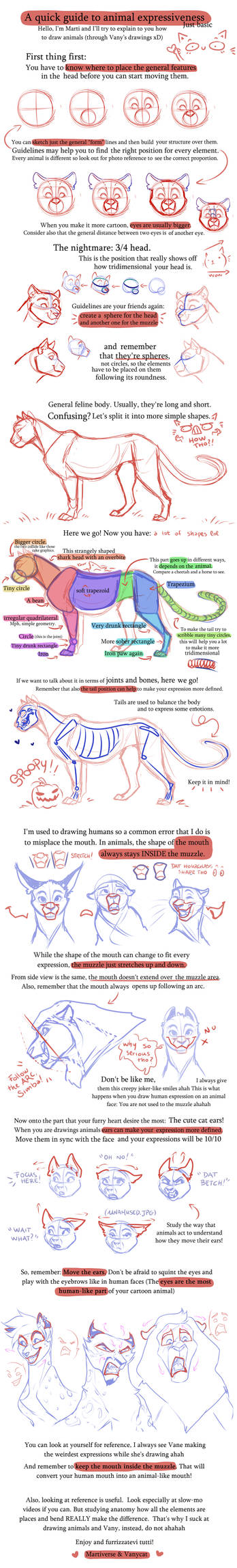 Tips and tricks for feline expressions