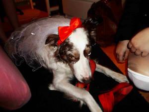 Dog Dress Up