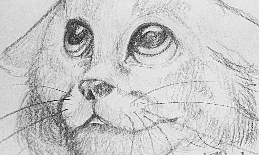 Kitty Cat by mangasprai
