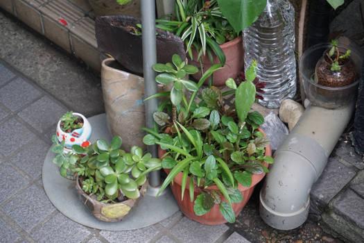 Tiny Tokyo Street Garden