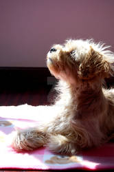 Atena - My Dog