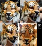 Tiger Mask Being Worn