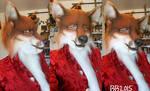 Red Fox w/Makeup