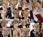 Feline Partial Collage