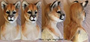 Tawny Cougar