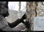 Werewolf: Graveyard shoot 005