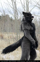 Werewolf: Graveyard shoot 009 by Magpieb0nes
