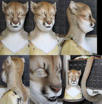 Puma head and tail set (SOLD)