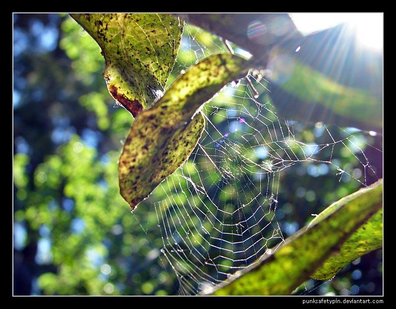 Sunny web by punksafetypin