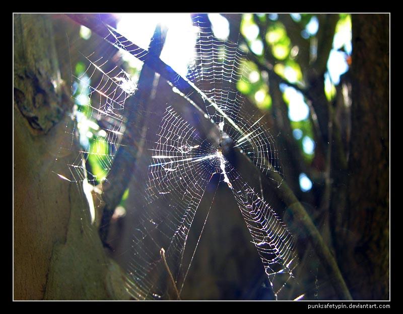 Sunny web 2 by punksafetypin