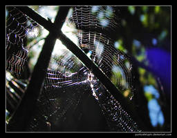 Sunny web 3