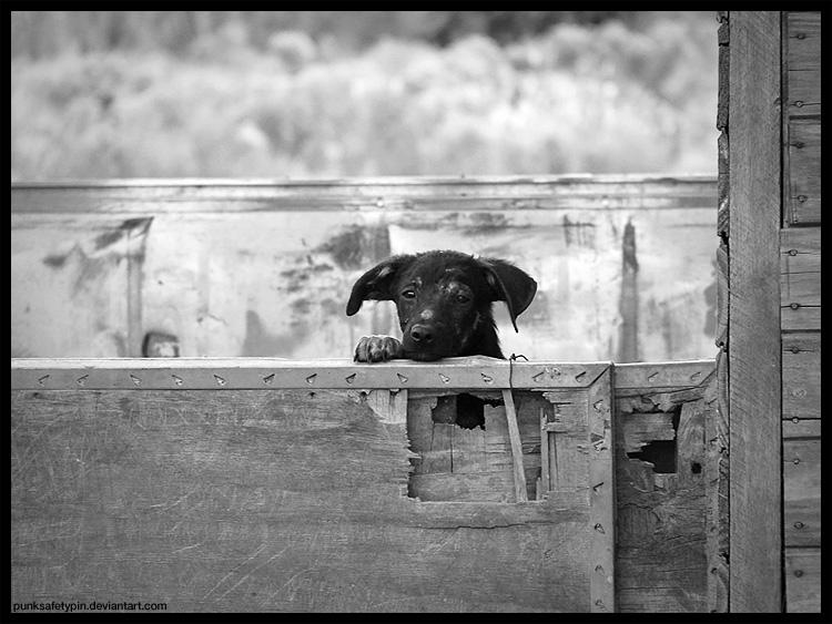 Puppy Eyes by punksafetypin
