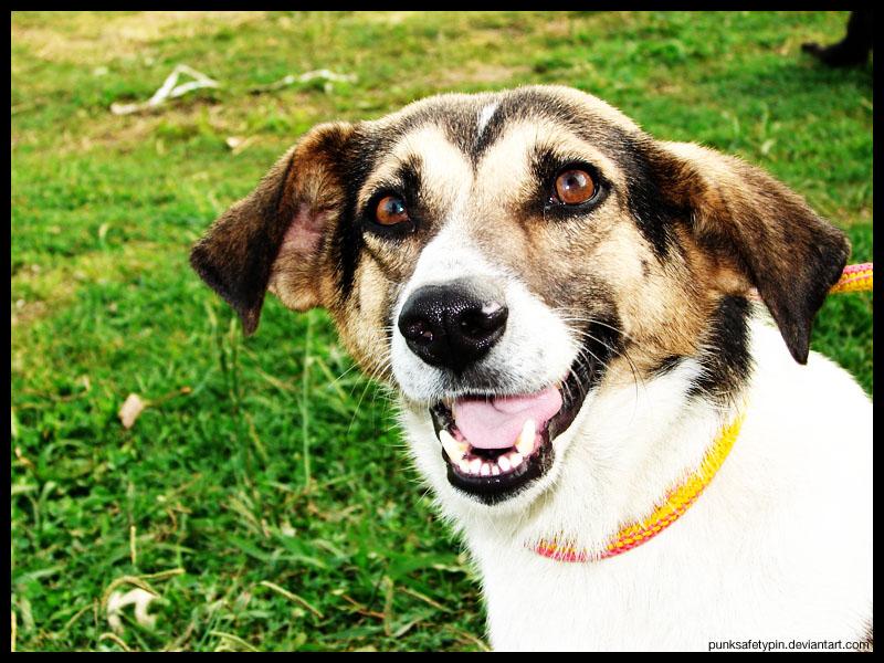 Doggie Smile by punksafetypin
