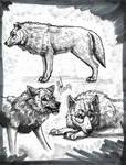 Wolf Studies #2