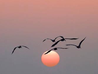 Pelican Sunrise, Tybee Island, Georgia by pixeldawg