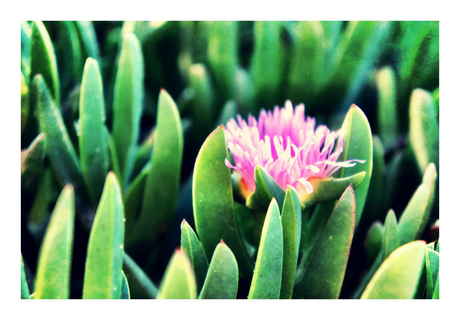 A Flower Among Succulents by CaseyAdamF