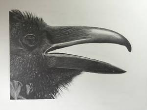 The Raven (graphite, 22x30)