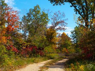 Autumnal Path