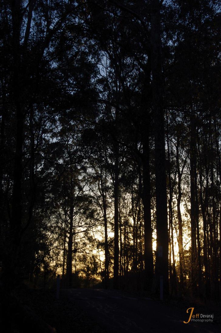 In the Bush by lucanus43