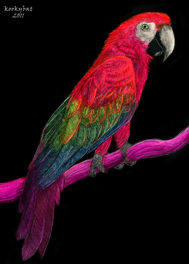 Rainbow Bird by kookybat