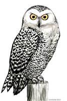 Ink Owl by kookybat