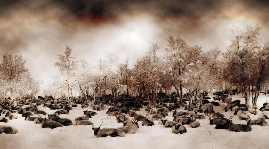 Reindeer garden by Rontolo