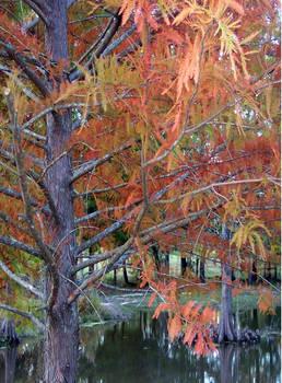 AutumnCedar by LindaTateWilson