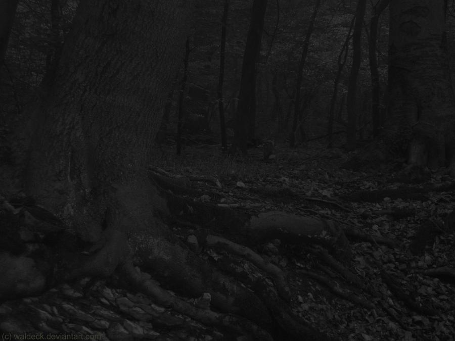 Night Forest - Nachtwald by Waldeck