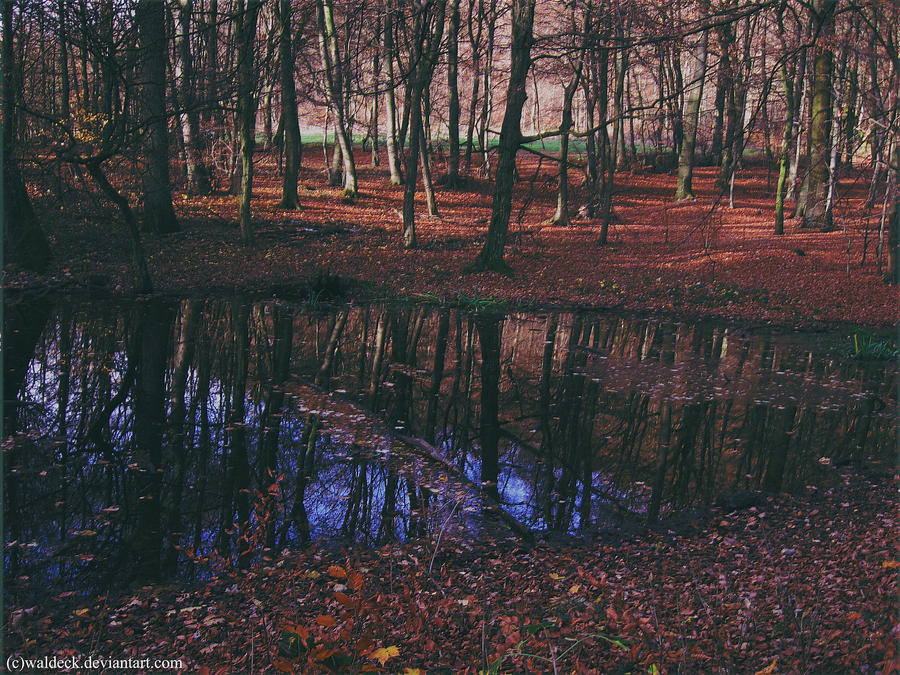 Red Riding Hood Forest by Waldeck