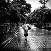 umbrella:: by pigarot