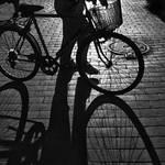 catch shadows 04