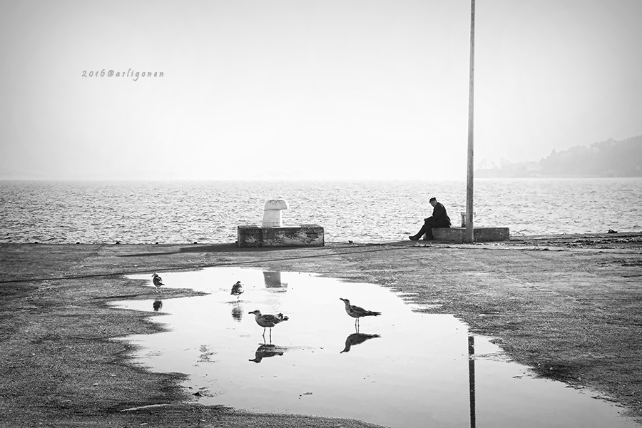Sea Gull by pigarot