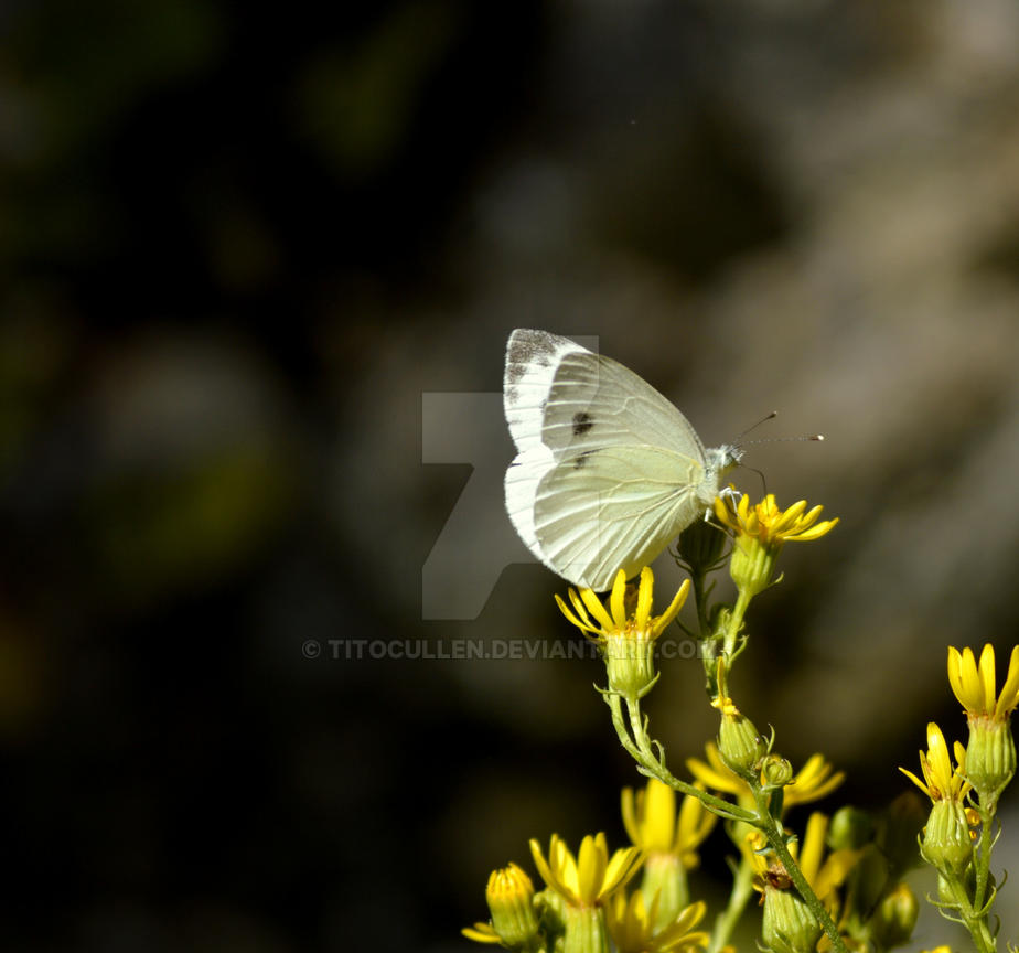 #Mariposa by TitoCullen