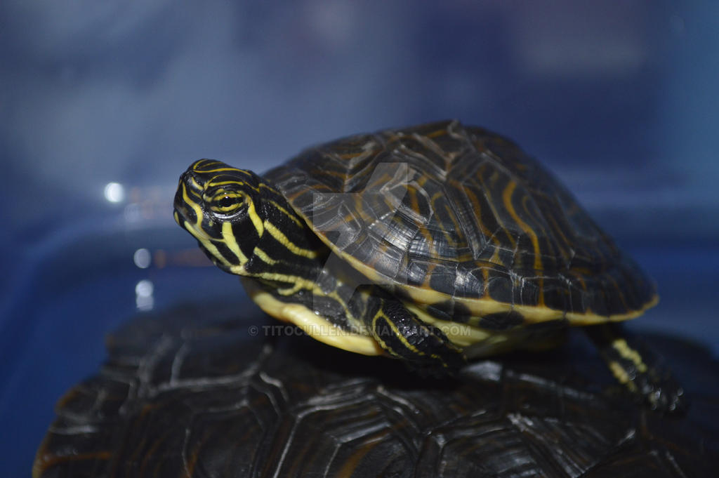 #Arrow #Turtle by TitoCullen
