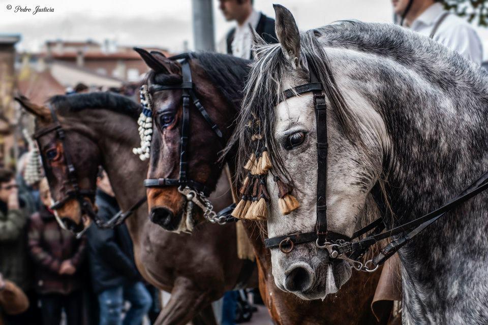 Horses by lightangel2012