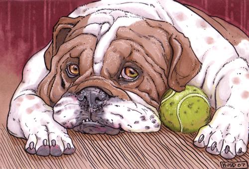 ACEO English Bulldog by Ahkahna