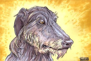 Scottish Deerhound by Ahkahna