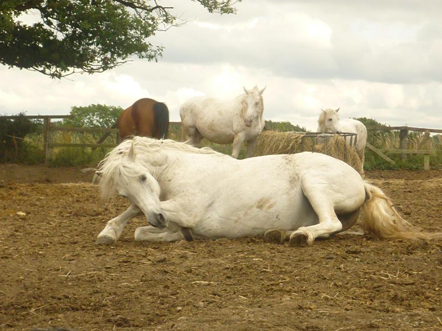 horse stock 10