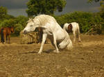 Horse stock 14