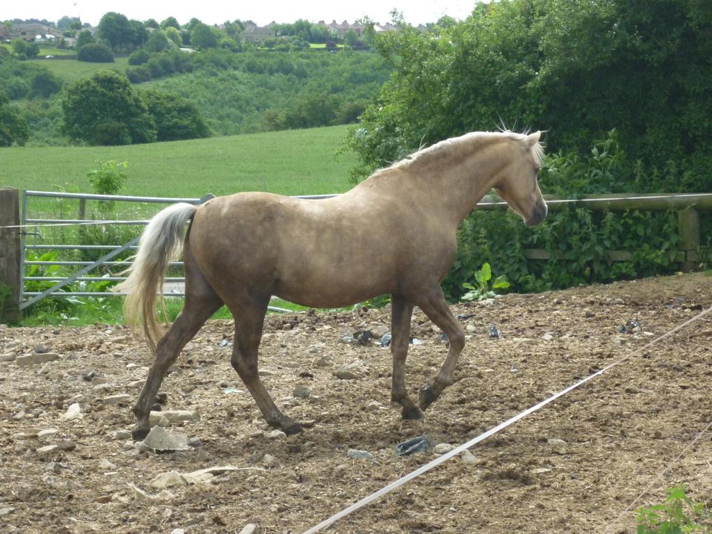 Horse Stock 66