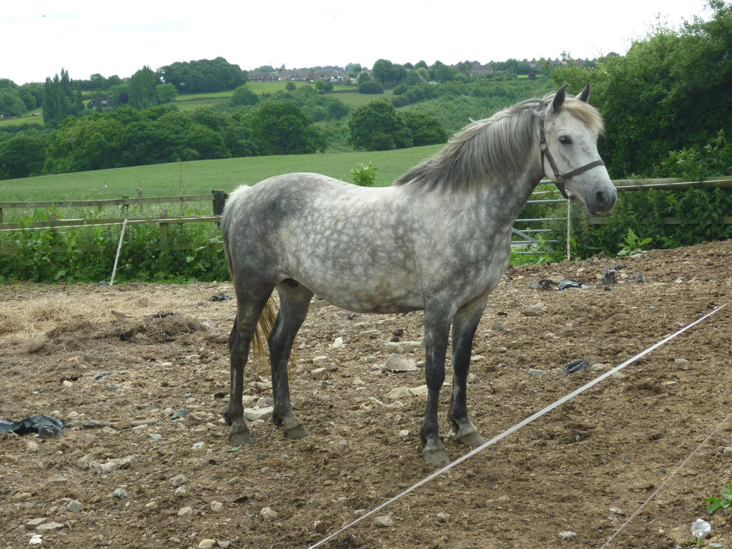 Horse Stock 75
