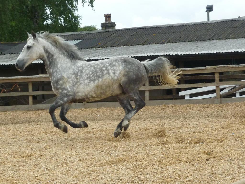 Horse Stock 105